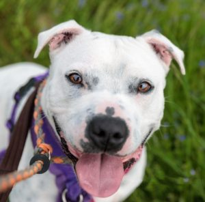 Dogs at Cheshire rescue centres needing a home